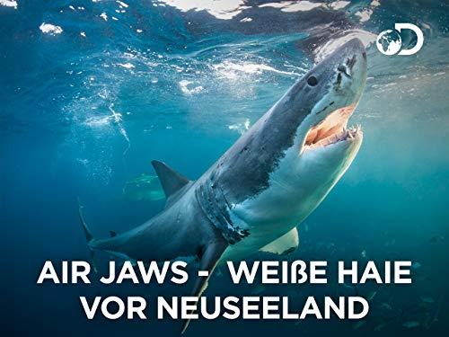Air Jaws: Weiße Haie vor Neuseeland - Wasser Shark