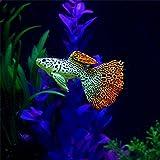 Berrose-Kunststoff Schwimmen Faux Gefälschte Gold Fisch Aquarium Decor Ornament Geschenk Dekoration Zierfisch Simulierter Goldfisch Mit Saugnapf Geschmacklos