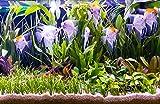 Zoomeister - Wasser-Pflanzen - Set 'Scalar' bis 130L, Aquarienpflanzen