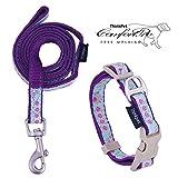 ThinkPet hundehalsband und Leine Set - hundehalsband bunt Nylon Leine Halsband Kragen für kleine Hunde Welpen Walking/Wandern, EINWEG Verpackung