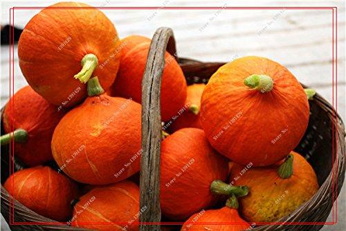 Graines de citrouille rares Cucurbita fil d'or de citrouille non-OGM légumes jardin Bonsai plantes ornementales semences Escalade 10 Pcs / sac 20