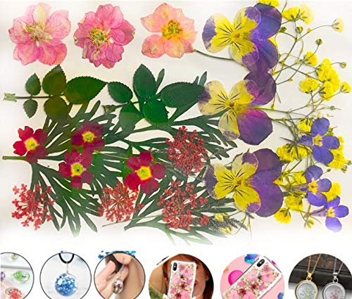 Mix-Rosa, Lila, Rot, Gelb, Stiefmütterchen Larkspur Queen Anne ' s Lace Natürliche Gepresste Getrocknete Blumen Blatt Ammi Trockenen Pflanzen Epoxy-Uv-Harz-Anhänger -