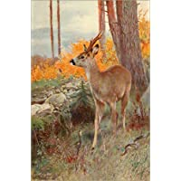 Leinwandbild Landschaft Reh Wald Tier Leinwand Bild Bilder Keilrahmen 9AB4413