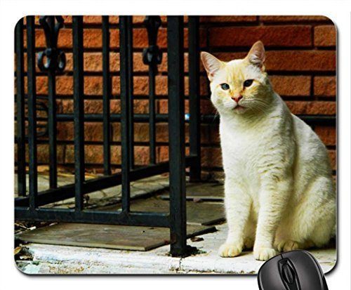 leonidas-my-cat-mouse-pad-mousepad-gatos-mouse-pad