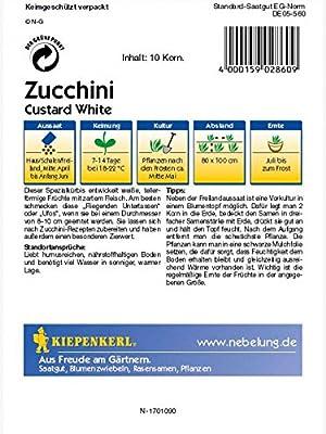 Zucchini Custard white Ufo weiss von Kiepenkerl - Du und dein Garten