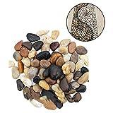 500 g Rayos de Río Guijarros Pulidos Naturales Piedra de Adoquín Grande y Pequeña Piedra de Colores para Pavimentación de Jardín, Acuarios, Paisajismo ,1-3 cm /2-4 cm/ 4-6 cm