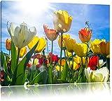 Blumenwiese Froschperspektive Bild auf Leinwand, XXL riesige Bilder fertig gerahmt mit Keilrahmen, Kunstdruck auf Wandbild mit Rahmen, guenstiger als Gemaelde oder Bild, kein Poster oder Plakat, Format:80x60 cm
