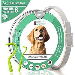 Beste Band mejor collar de garrapatas para perros y gatos pequeños, medianos y grandes, impermeable, protección contra pulgas y garrapatas natural Protección eficaz contra las pulgas (para perros)