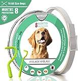 Pulci e zecche collare cane collare antipulci pulci e zecche collare per cani regolabile impermeabile Proteggere per cani 63 cm (per i cani)