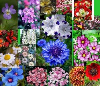 Wildblumen Mischung, Mix der Saison, 2000 Samen (keine Gräser),beliebteste Blumen für alle Farben des Regenbogens