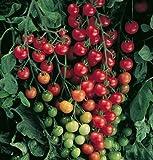 Légende Jardinerie en ligne Graines de tomate cerise Supersweet 100 DV3981A (Rouge) 25 graines hybrides