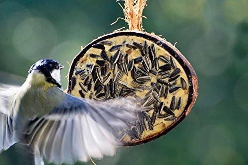 dobar Zehn gefüllte Kokosnüsse in 5 Vogelfutter-Sorten zum Aufhängen - 12