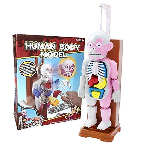 TARTIERY Menschliches Körpermodell 4D zusammengesetztes menschliches Körpermodell Lernressourcen Menschliches Körpermodell Anatomiemodelle Bundle-Set mit Horror-Sound für Kinder Kinder