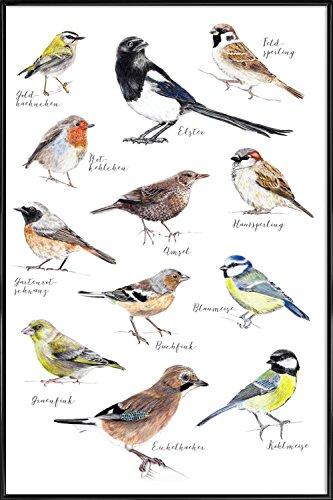 JUNIQE® Bild mit Rahmen 20x30cm Vögel Kinderzimmer & Kunst für Kinder - Design