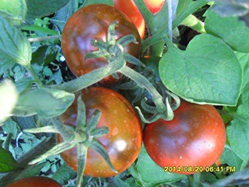 Famous Hungarian Kumato Tomatos, Best Taste Worldwide !! NON GMO, 20 graines