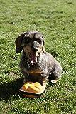 Hundespielzeug Quietsch-Leberkäs-Semmel zum Quietschen und Spielen