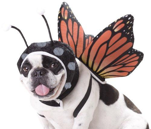 Schmetterling Kostüm Hund (Schmetterling Hund Kostüme)