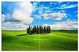 Wallario Herdabdeckplatte/Spritzschutz aus Glas, 2-teilig, 80x52cm, für Ceran- und Induktionsherde, Motiv Kleiner Wald inmitten Einer weiten Wiese