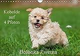 Kobolde auf 4 Pfoten - Bolonka Zwetna (Wandkalender 2018 DIN A4 quer): Lassen Sie sich verzaubern von einer entzückenden Hundefamilie (Monatskalender, ... [Kalender] [Apr 27, 2017] Starick, Sigrid