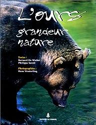 L'ours grandeur nature