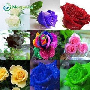 VISTARIC 50 PC/Beutel, Yucca Samen, Topf Samen, Blumensamen, Vielfalt abgeschlossen ist, die angehende Rate 95%, (Mischfarben)