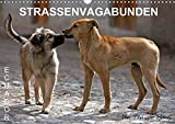 STRASSENVAGABUNDEN (Wandkalender 2020 DIN A3 quer): Straßenhunde in Ecuador (Monatskalender, 14 Seiten ) (CALVENDO Orte) -