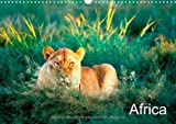 Africa (Wall Calendar 2013 DIN A4 Landscape): Africa´s animals in colourful pictures. Month Calendar, 14 pages (CALVENDO Tiere)