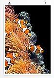Eau Zone Bilder - Tierbilder – Korallen und Clownfische- Leinwand Kunstdrucke Wandbilder aus Deutschland
