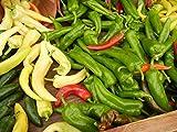 Asklepios-seeds® - 15 Semillas de chili anaheim pimientos, crudos, chile, ají, chiltoma o morrón, bixo, bolas, cacho de cabra, cápsico, chil, chile verde, chile (fruto)