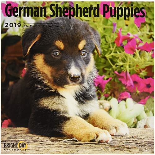 German Shepherd Puppies 2019 (BREEDS)