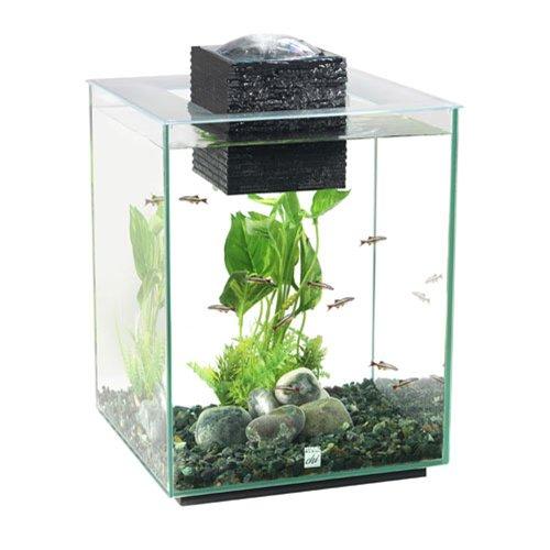 Fluval Chi 2 Aquarium 19 ltr deluxe fish tank Test