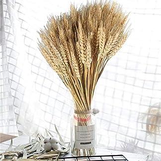 terynbat Ramo de Trigo, Flores secas de Trigo Grande Natural Plantas de jardín Colores primarios Naturales Trigo Real para Decoraciones de Bodas, 100 Piezas.