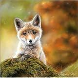 Impresión en metacrilato 60 x 60 cm: Fox III de TBril Art