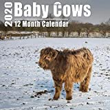 Mini Calendar 2020 7x7 Cows: High Quality Cute Baby Cow Photos Small Calendar With Inspirational Quotes each Month
