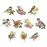 3-D Motive, Wellensittiche & Vögel, 7-9cm, 10 Stück | Bilder zum Basteln & Dekorieren | Grußkarten, Geburtstagskarten selber machen | Bildmotive für Scrapbooking & DIY-Deko