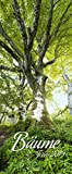 Bäume 2019: Schmaler Wandkalender. Foto-Kunstkalender über prächtige Bäume in der Landschaft. PhotoArt Vertikal. 28,5 x 69 cm. Edles Foliendeckblatt.