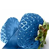 iDealhere(TM) Leckeren Erdbeere Samen für Garten Pflanzen Gemüse Obst ca.100 Samen (Hell blau)