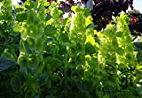 Viel Loved Gerbera Jamesonii Samen 20pcs, Samen Zierpflanze Barberton Daisy Blume, sehr kultiviert Transvaal Daisy Seeds