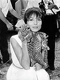 Image de La dolce vita : l'âge d'or de la célébrité et du style italien