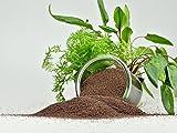 Guemmer Sand, 5kg, Aquarienkies, Aquariensand, verschiedene Körnungen + Farben - Made in Germany - (0,4 - 0,8 mm, braun)