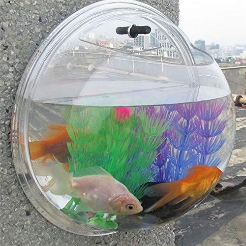 60% OFF on Adeeing Aquarium Plant Seeds, Aquatic Water Grass