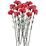 Fourwalls Single Carnation (Set of 15, Dark Pink)
