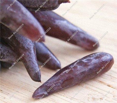Bonsai Finger de pépins de raisin délicieux plantes en pot bio Maison et Jardin des plantes ornementales comestibles Can sain fruits semences 60 Pcs 10
