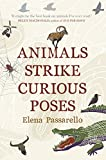 Animals Strike Curious Poses