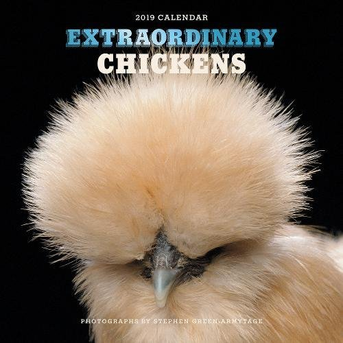 Extraordinary Chickens 2019 Wall Calendar