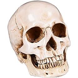 perfk Modelo de Cráneo Artesanía Modelo de Calavera Material de Estudios Decorativo DIY