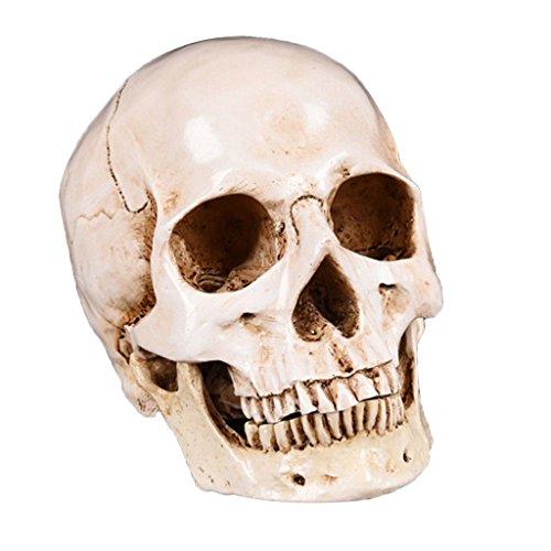 MagiDeal 1 Stück Schädel Modell Menschlich Schädel Modell Lebensgroß Dekoration für Maskeraden, Kostümpartys