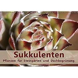 Sukkulenten - Pflanzen für Steingärten und Dachbegrünung (Wandkalender 2019 DIN A3 quer): Sukkulenten auch Dickblattpflanzen genannt speichern in ... (Monatskalender, 14 Seiten ) (CALVENDO Natur)