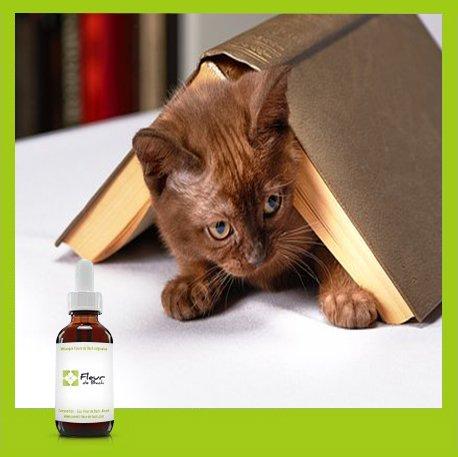 """Fleurs de Bach Chat stressé""""Sans Alcool"""" - Un mélange qui va aider votre chat à se calmer (30 ML)"""