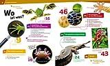 Reptilien und Amphibien. Gecko, Grasfrosch und Waran
